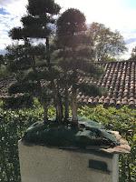 Bonsáis - Jardín Botánico de Madrid