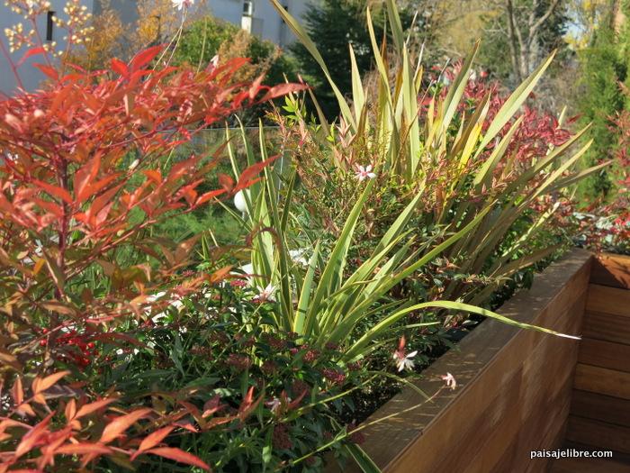 Plantas de exterior resistentes al sol y al frio for Plantas exterior sol