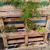 Hortas Urbanas: o cultivo sustentável e saudável de alimentos dentro das cidades
