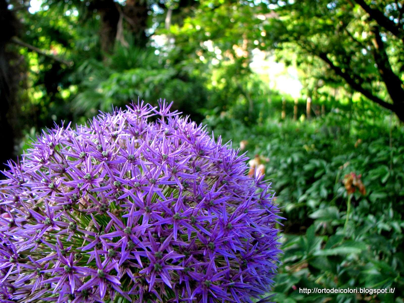 L 39 orto dei colori fiori viola for Fiori con la l
