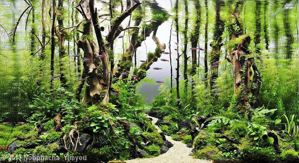 bố cục hồ thủy sinh phong cách rừng vô cùng ấn tượng