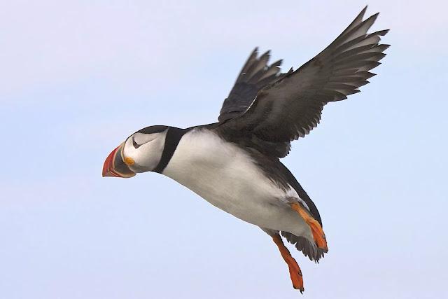 انواع طيور الماء بالصور 2018