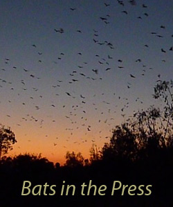 bats in the press