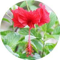 Naturaleza-interior-Bali