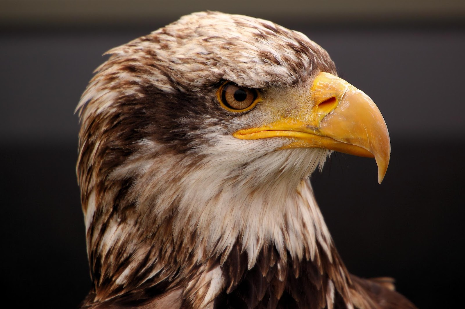 Comfort Negedu: LEARN FROM EAGLES