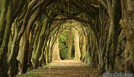 The Tunnel Of Trees, Ukraine