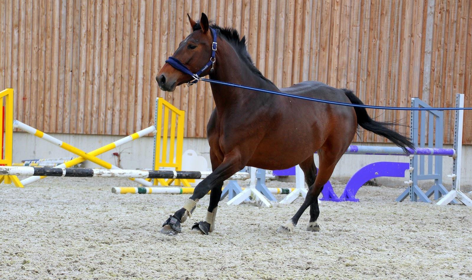 ca2abb047630e Właśnie taki spokojny jeździec na spokojnym i zrównoważonym koniu (mówię tu  o kwestiach fizycznych bo z psychiką to trudno, to wszyscy wiemy, ...