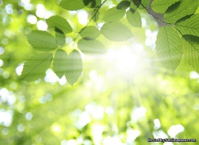 Kajian Membuktikan Cahaya Matahari Mampu Membakar Lemak Tubuh Dan Menurunkan Berat Badan