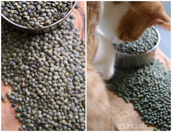 Cats Love Lentils | www.girlichef.com