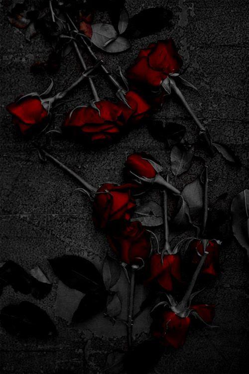 gothic roses  Gothika  Pinterest
