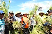 Panen Raya di Desa Monggo, Bupati Minta Semua Pihak Dongkrak Hasil Pertanian