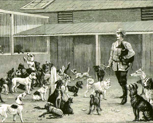 Asilo de perros de Battersea,  Inglaterra. Grabado publicado en La Ilustración Española y Americana, 30-5-1886