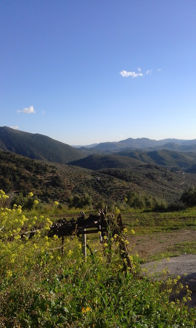 Spanish mountain view, wild flowers, Sierra Sur de Jaen
