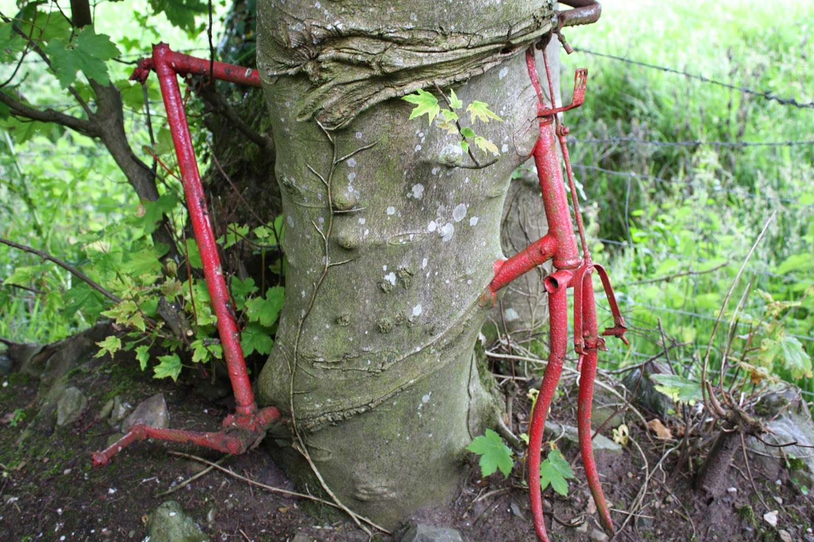 20 Fascinating Images Of Trees Growing Despite Objects In