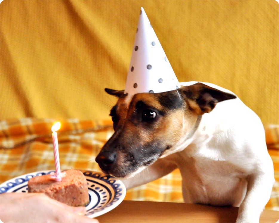 Memi The Rainbow Happy birthday Fifi!!! Dog party hat template