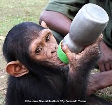 Image result for Kera di hutan disusukan, anak di rumah mati kelaparan...