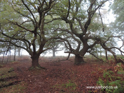 Oaks, Skipwith Common, North Yorkshire