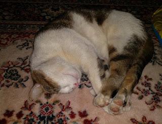 Reiska, kissa, Tatun kuva