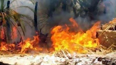 حريق الراشدة بالوادي الجديد