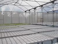 Inilah 5  Manfaat Pembangunan Greenhouse Untuk Budidaya Tanaman