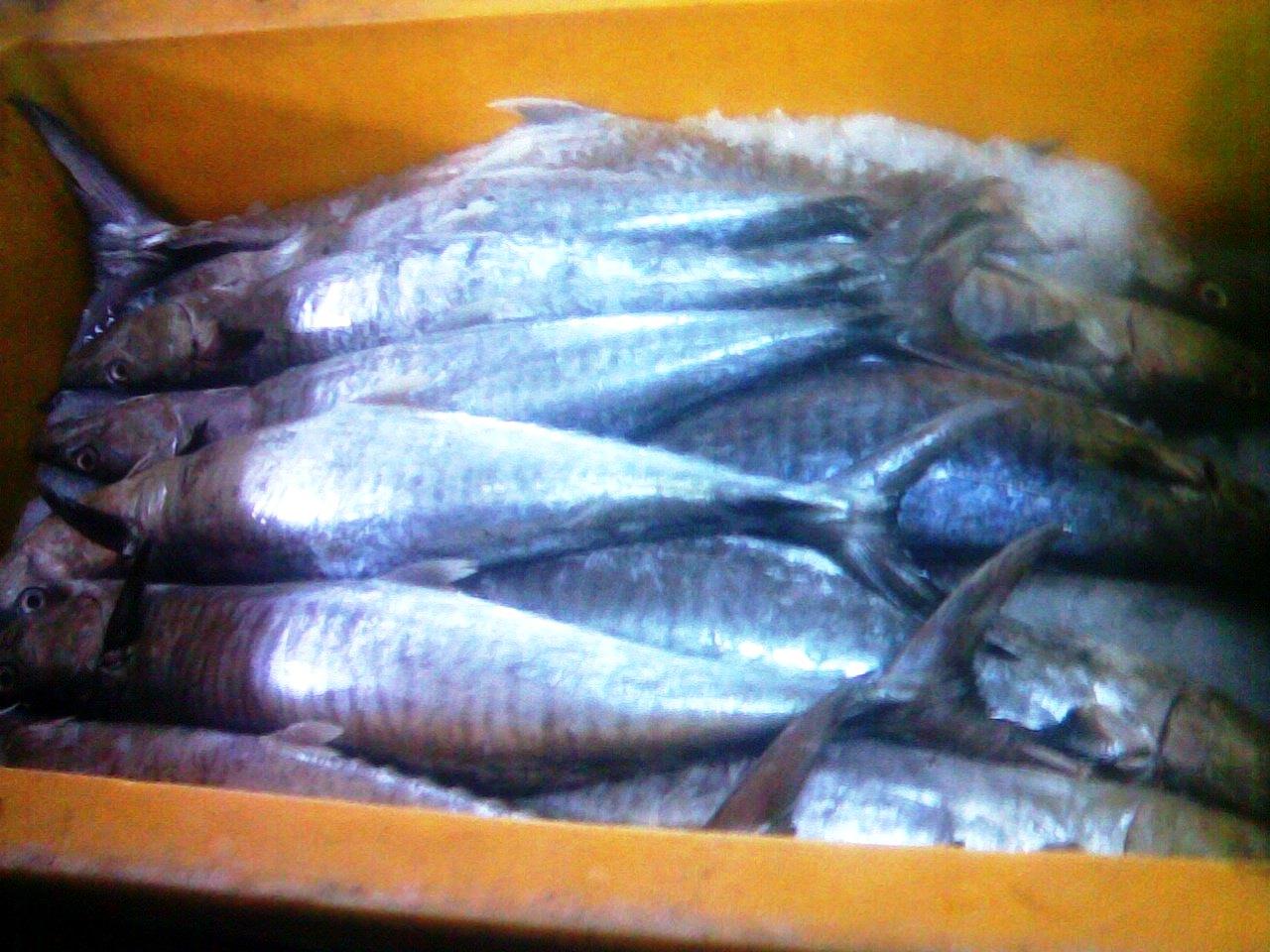 Ikan laut beku