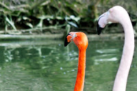 München, Zoo, Tierpark, Hellabrunn