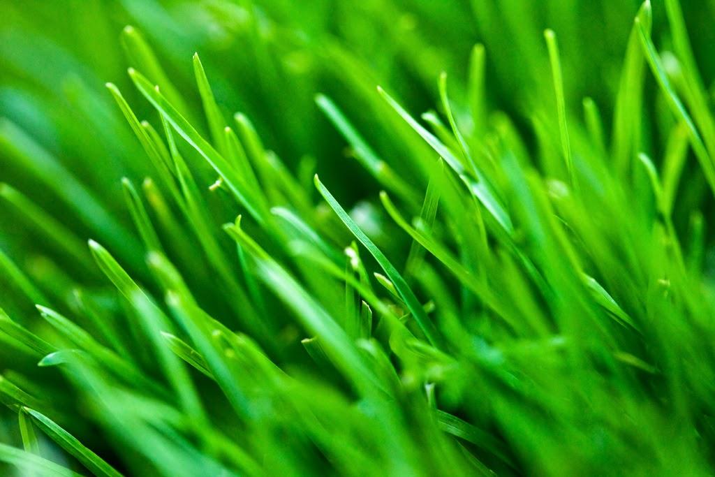 Funny Irish turf grass joke picture story