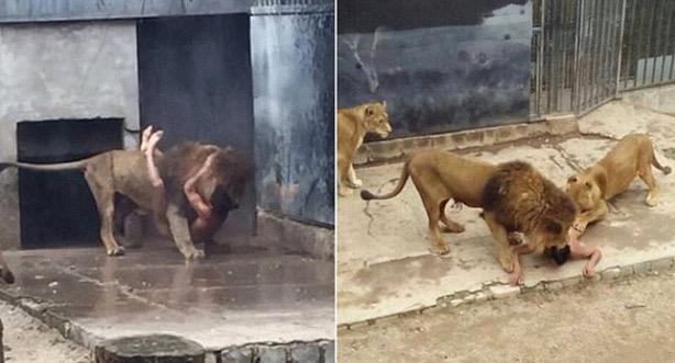 Lelaki Mahu Bunuh Diri Dengan Terjun Dalam Kandang Singa