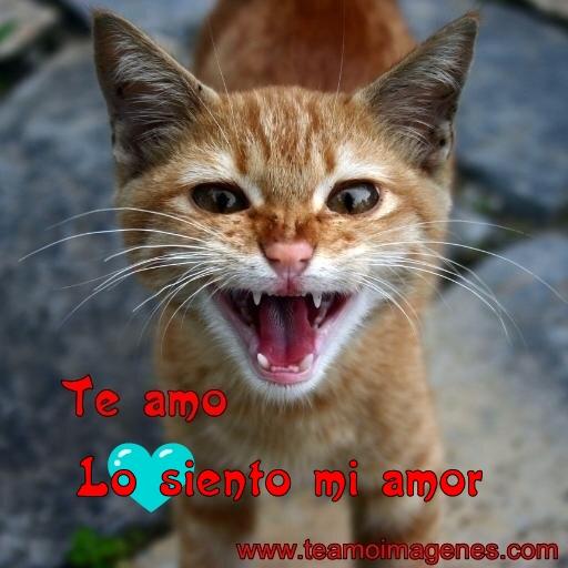 Imágenes de lindos gatitos con la frase lo siento mi amor, temoimagenes.com