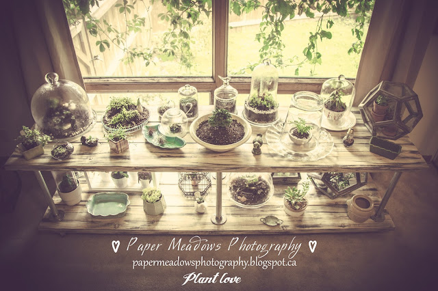 Paper Meadows Photography Blog-DIY rustic wood shelf for plants and terrariums