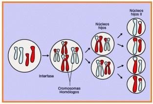 Biologi Gonzaga Soal Pre Test Pembelahan Sel