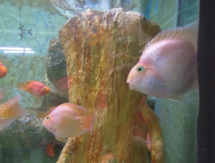 A group of fish at Manila Ocean Park's oceanarium