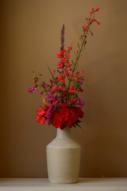 desert garden, small sunny garden, amy myers, monday vase meme, pelargonium, penstemon, russelia