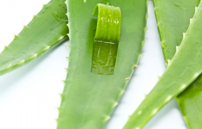 is aloe vera help acne