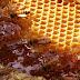 Arılar Balı Nasıl Üretir