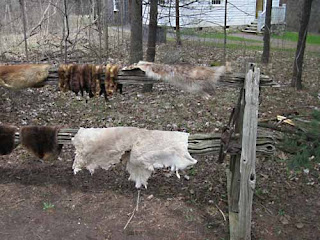 Furs dry on a fence at Westfiled Village.