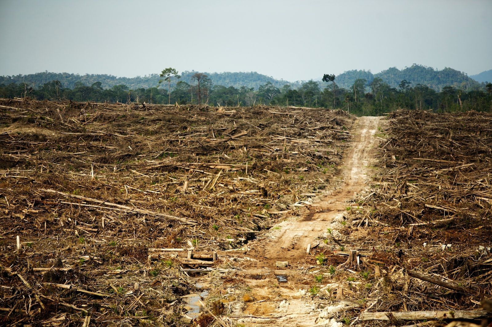 How to Save Tropical Rainforests