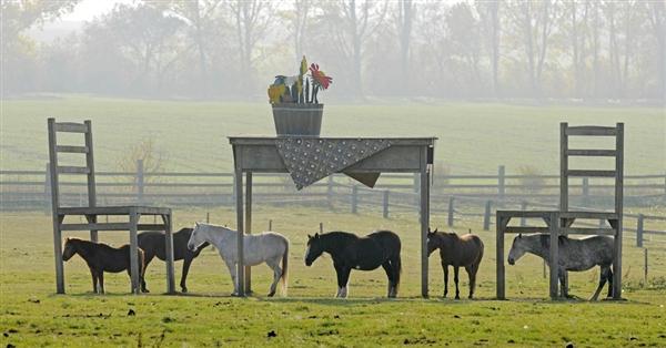7 Illusion Horses Optical
