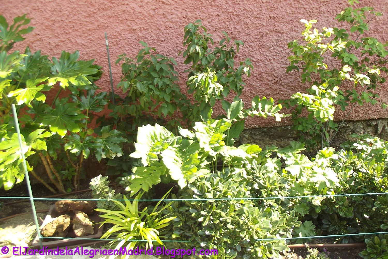 El jard n de la alegr a 06 11 17 for Como quitar las hormigas del jardin