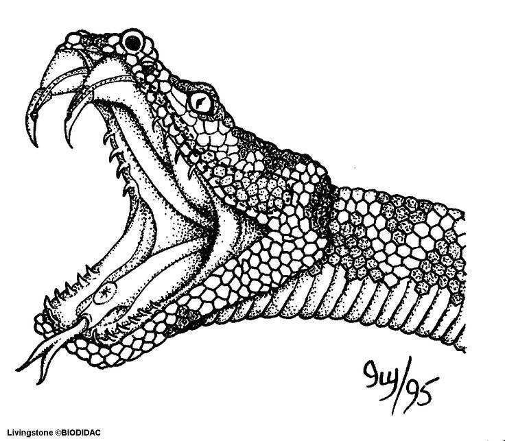 serpent dessin