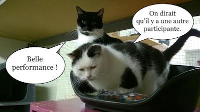 Deux beaux chats noirs et blancs.
