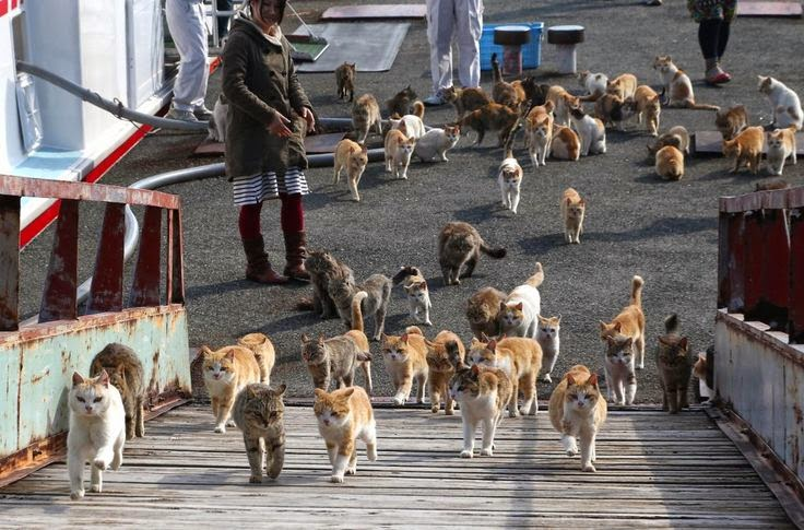 Amazing Travel Destination For Cat Lovers