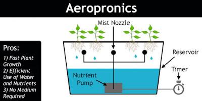 How to Plant Hydroponics Aeroponics System (Aeroponics)