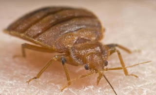 bed bug seattle washington, bed bug control, bed bugs