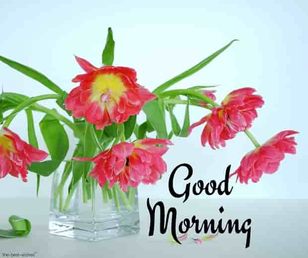 beautiful good morning with flower