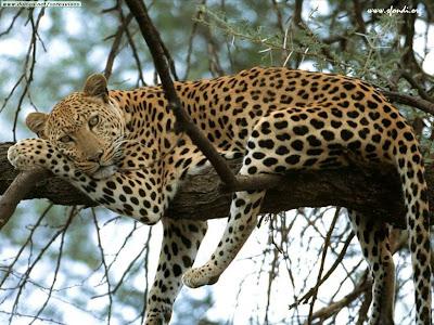 Resultado de imagem para fotos espetaculares de animais