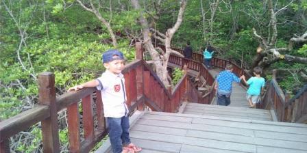 Harga Tiket Masuk Taman Wisata Mangrove Sukadana