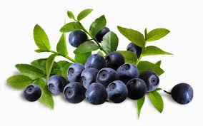 Buah Blueberry