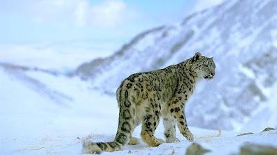 Flora y fauna Kazajistán