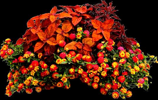 Arbustos con flores for Arbustos con flores